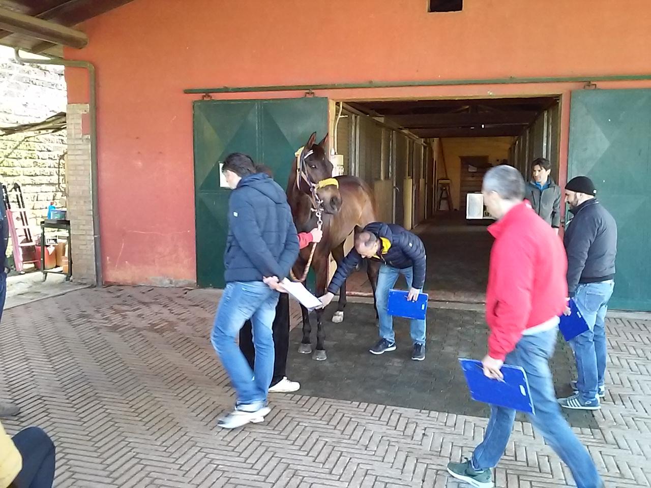 cavalli da corsa in vendita in italia