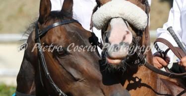 fucecchio cavalli
