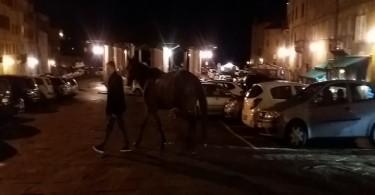 CAVALLO DELL'ANNO 2018 E CELLI
