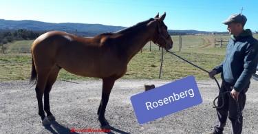 rosenberg 2019 mannucci grande