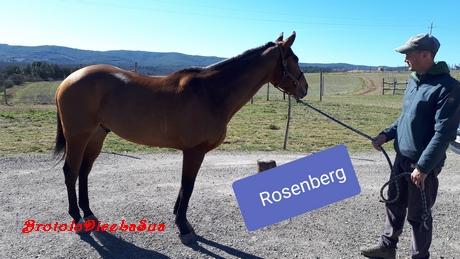 rosenberg 2019 mannucci