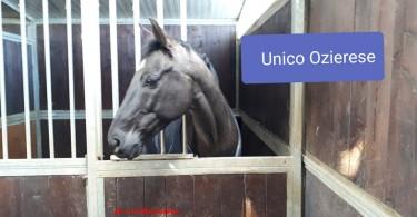 unico ozierese 2019 mannucci