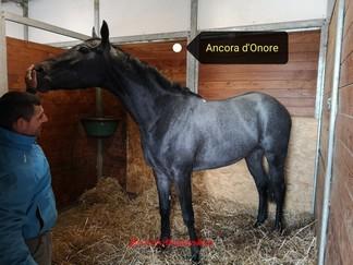 ANCORA-DONORE-810x608